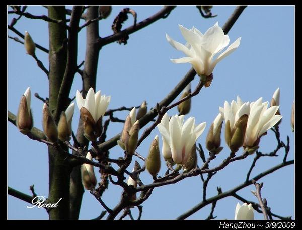 木蘭の画像 p1_23
