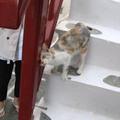 米克諾斯鎮巷子裡 遇到第一隻撒嬌自來貓