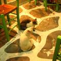 哀求貓是講究團隊效率的(另外兩隻因為到處趕攤 沒拍到)