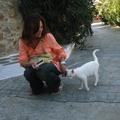 米克諾斯戶外小劇場附近的撒嬌自來貓