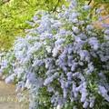 海德公园的花