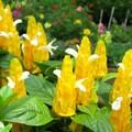 都是一些我所喜愛的花  我所看見的花  我所栽種的花  所有的影像  都得感謝這台陪伴我的數位相機囉