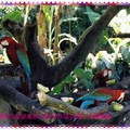 綠世界-金剛鸚鵡