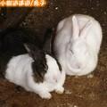 兔子(185)