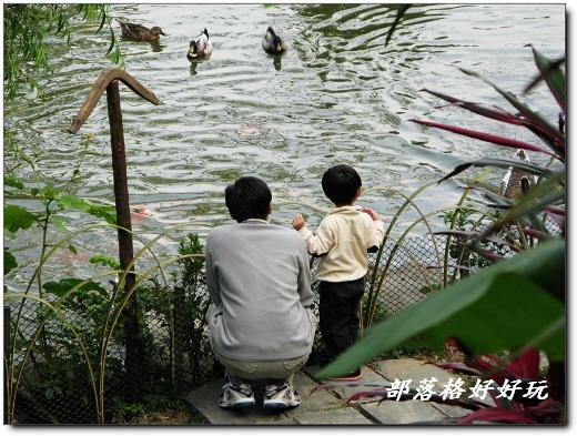 晨曦的山中花園有一座美麗的湖,親子同遊最愛在這兒餵鴨鵝