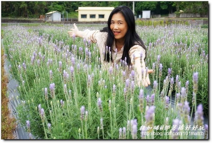葛瑞絲香草田》北台灣最大的薰衣草花園@苗栗頭屋 免費入園參觀