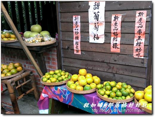 各種柑橘類排排站
