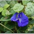 湧椿茶花園 - 55