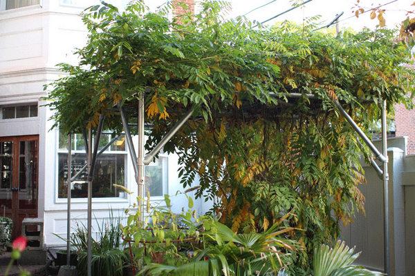 自己架設葡萄藤架跟溫室的情蒐 Cliqueyi 的美國時間 Tucson 生活 Udn部落格