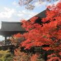 日本清水寺楓葉
