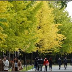 北海道中島公園