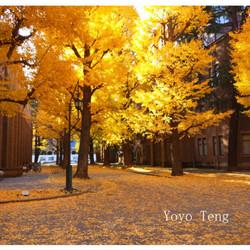 银杏-东京大学