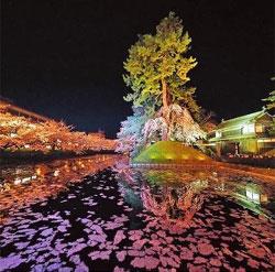 青森弘前櫻花祭