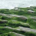 參訪老梅綠石槽