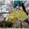 四月上旬是慶洲櫻花的季節,若想體驗不一樣的賞櫻,當地有舉辦「馬拉松」路跑。
