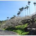 「烏松崙」是處南投縣信義鄉賞梅露營景點,在歲末年初梅花綻放時,將吸引更多拍照與賞花者前來。