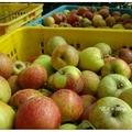 次日安排到尚品果園採蜜蘋果。  園主細說圍繞果園四周的高山,並免費招待吃蜜蘋果與雪梨,接著跟隨他採蘋果去。