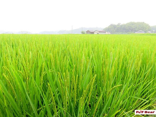 奈良猿澤遊客中心─免費到明日香村 - 飛鳥單車遊(2015年11月有) - 芙芙在這裡 - udn部落格
