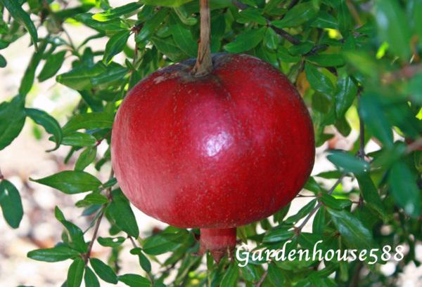 http://g.udn.com.tw/upfiles/B_GA/gardenhouse588/PSN_PHOTO/582/f_10857582_1.jpg