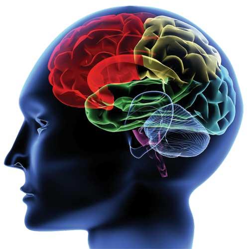 「大腦記憶」的圖片搜尋結果