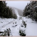 雪景-大屯山步道