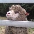 桃园-绿光森林富野绵羊牧场