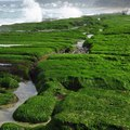 大海的綠意濃了 北海岸老梅 - 22