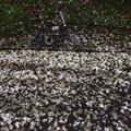 小粗坑的桐花季 - 18
