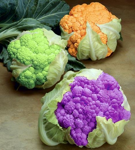 圖片:基因改造的玉米、花菜、還有 ... 看不出是
