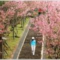 *台灣風景點照片00012