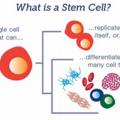 *幹細胞照片0003