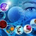 *幹細胞照片0004