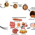 *幹細胞照片0005