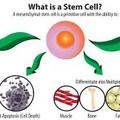 *幹細胞照片0010