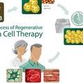 *幹細胞照片0011
