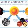*幹細胞照片0014