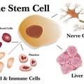 *幹細胞照片0018