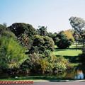 (251)墨爾本-皇家植物園
