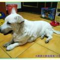 (216)我的動物朋友-小白