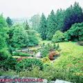 (322)溫哥華-伊利莎白皇后公園