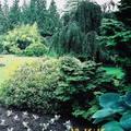 (328)溫哥華-伊利莎白皇后公園