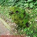 (095)滿月圓森林遊樂區-魚頭枯木