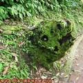 (096)滿月圓森林遊樂區-熊頭枯木