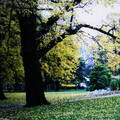 (229)墨爾本-費茲洛花園之秋天景致