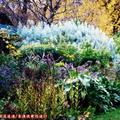 (230)墨爾本-費茲洛花園之秋天景致