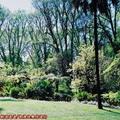 (231)墨爾本-費茲洛花園之春天景致