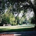 (233)墨爾本-費茲洛花園之初秋景致