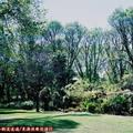 (236)墨爾本-費茲洛花園之春天景致