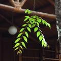 多樹多木多綠葉 見樸見素見優雅  散播人間葉綠素 樹立世間優雅木  已刊文章: 花蓮慈濟探真情