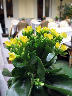 每桌漂亮的植物